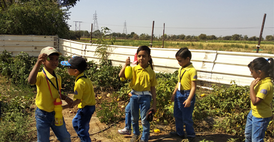 Field Trip to Amba Farm - PrePrimary